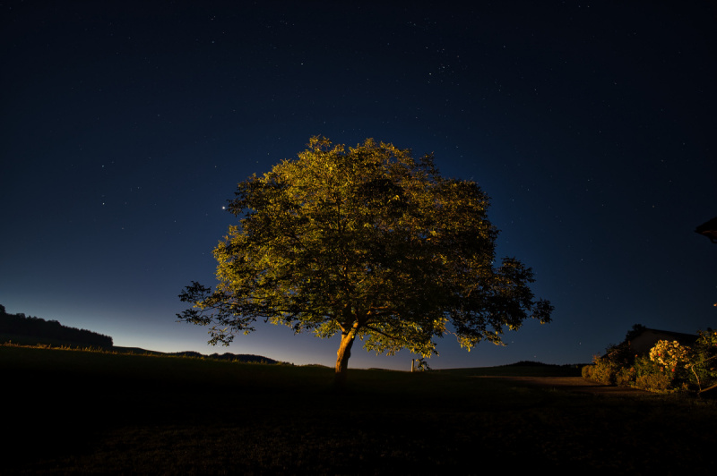 Bryant_Tree_lit_at_night_rural_Austria