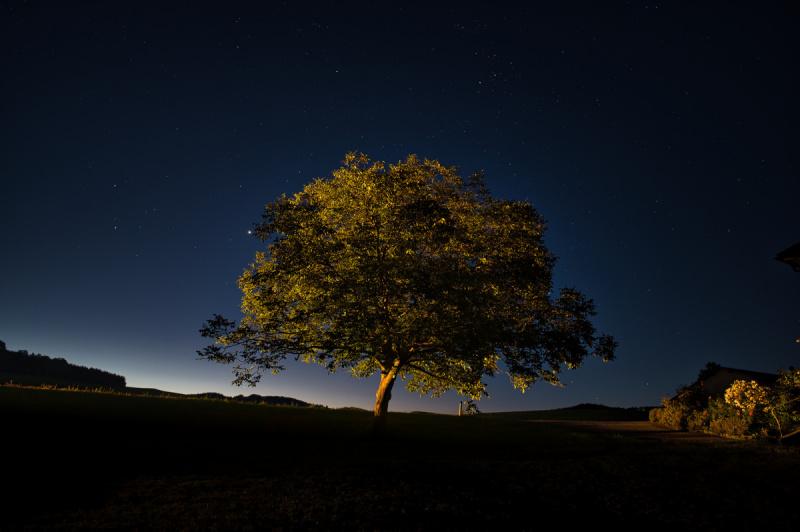 Bryant_Tree_lit_at_night_rural_Austria